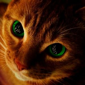 E8 seven episode movie by Warrior cats-Squirrelflight • A
